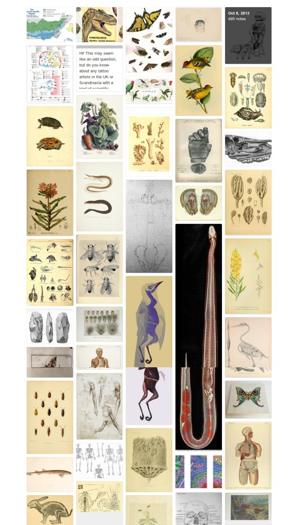 Scientific Illustration Tumblr Archive