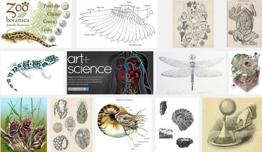 Google Image Search: Scientific Illustration